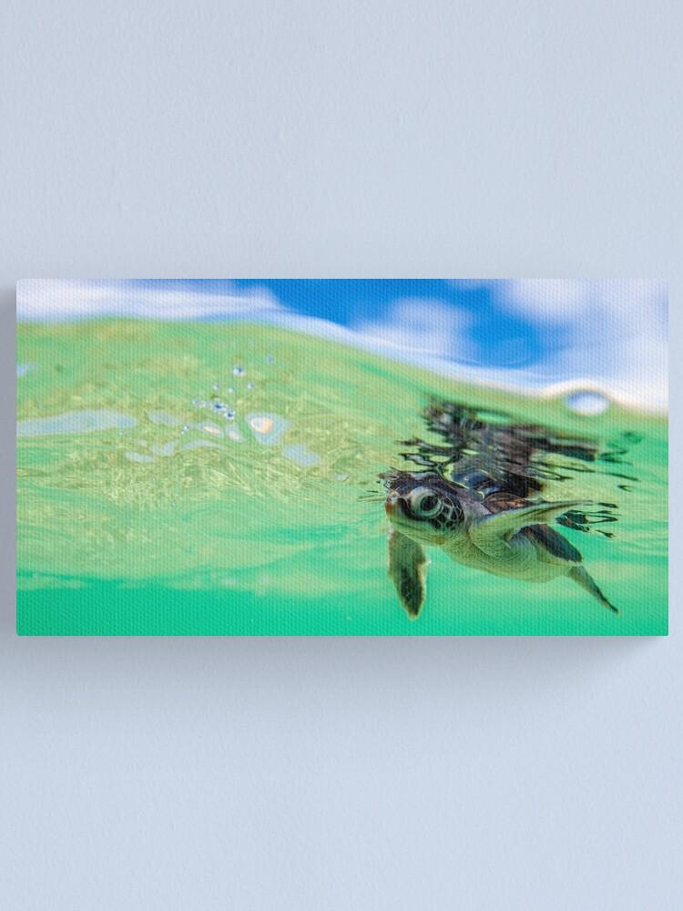 Alternate view of Ocean swimmer Canvas Print