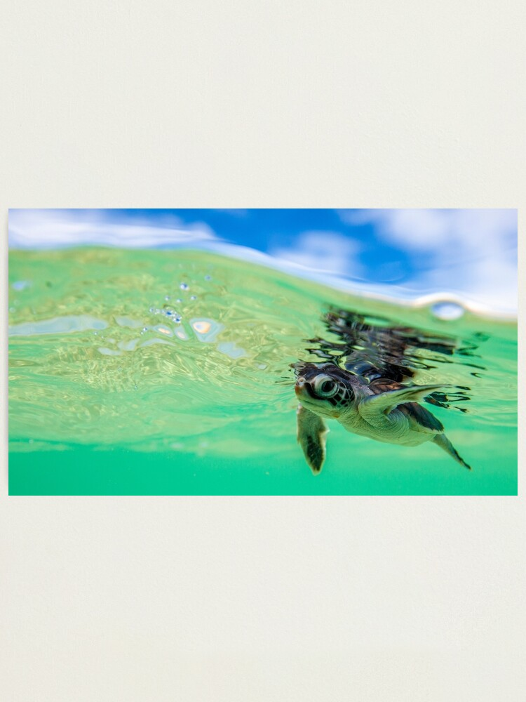 Alternate view of Ocean swimmer Photographic Print