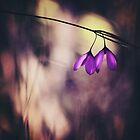 Hidden Treasures by Cloudlingpics