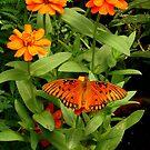 Orange Creatures by Rodney Lee Williams