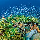 Reef life, Raja Ampat by David Wachenfeld