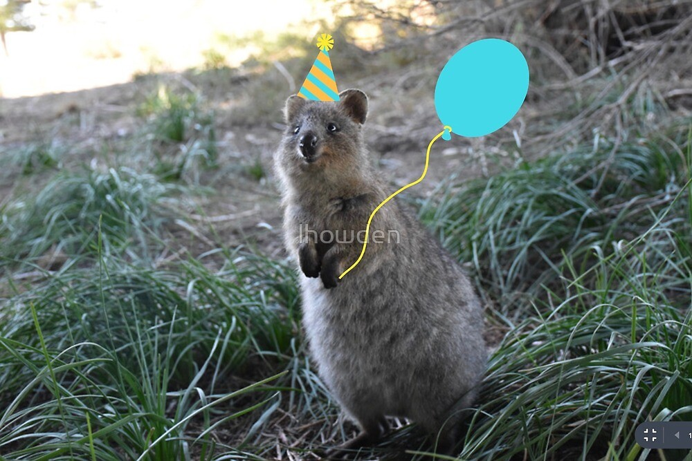 "Birthday Quokka"" by lhowden 