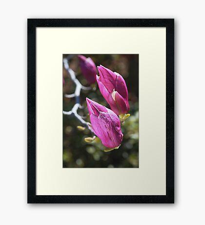 Magnolia's Family Framed Print