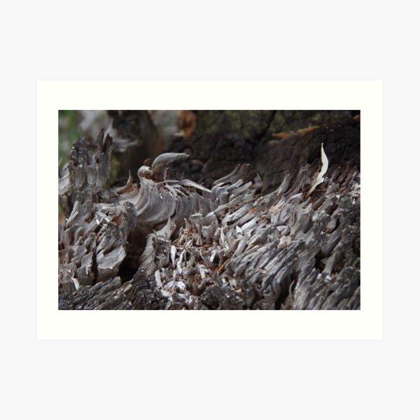 Cold Fire (Serpentine Bush, WA) Art Print