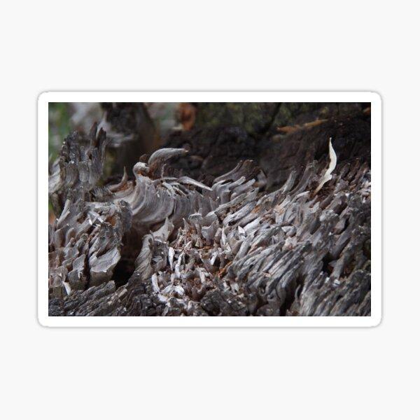 Cold Fire (Serpentine Bush, WA) Sticker