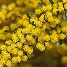 Golden As Wattle by Joy Watson