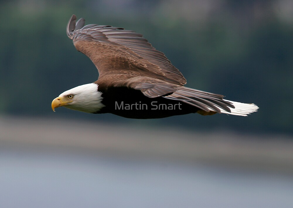 Cruising at Altitude by Martin Smart