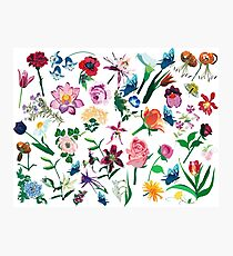 Assorted Colorful Flowers Pattern Photographic Print