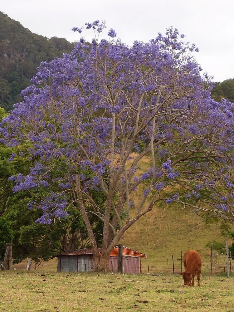 Rural Jacaranda by Pixsell