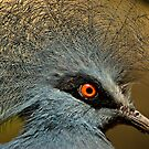 Blue Crowned Pigeon by maileilani