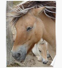 Horse 2 (Equus ferus caballus) Poster