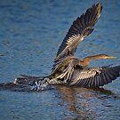 Anhinga Landing by TJ Baccari Photography