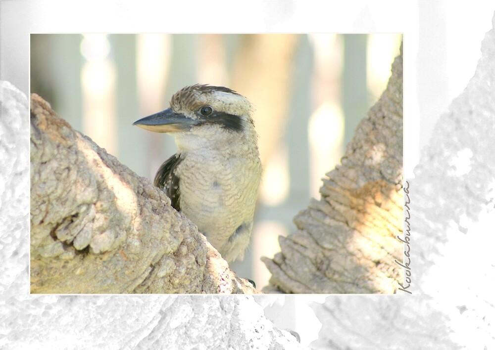 Kookaburra by Holly Kempe