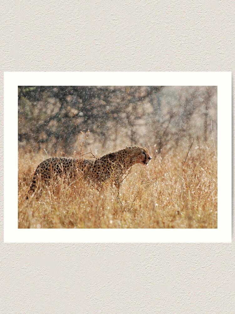 Alternate view of Cheetah in Serengeti rain Art Print