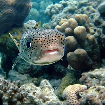 Porcupine fish by lilithlita