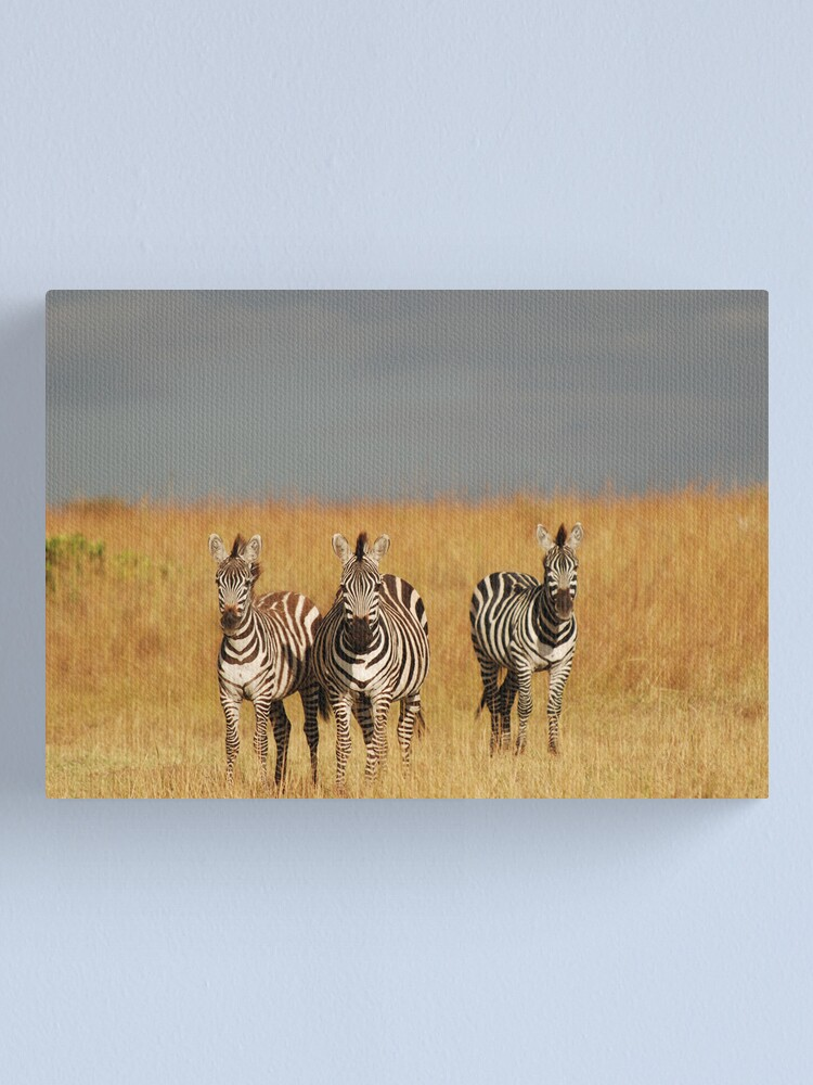 Alternate view of Zebras in the Masai Mara Canvas Print