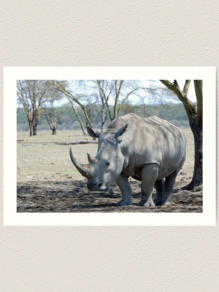 Alternate view of Rhino - Lake Nakuru, Kenya Art Print