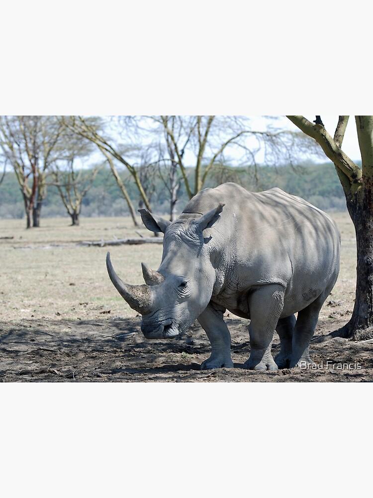 Rhino - Lake Nakuru, Kenya by bfra