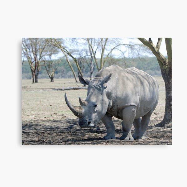 Rhino - Lake Nakuru, Kenya Metal Print