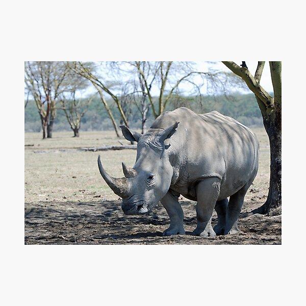 Rhino - Lake Nakuru, Kenya Photographic Print