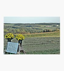 Mums For Sale Photographic Print