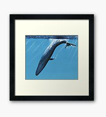 Diving Blue Framed Print