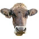 Brown Cow Face by Bonnie T.  Barry