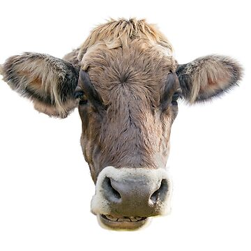 Brown Cow Face by Miracles