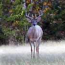Texas Buck ~ Out In The Evening by Penny Odom