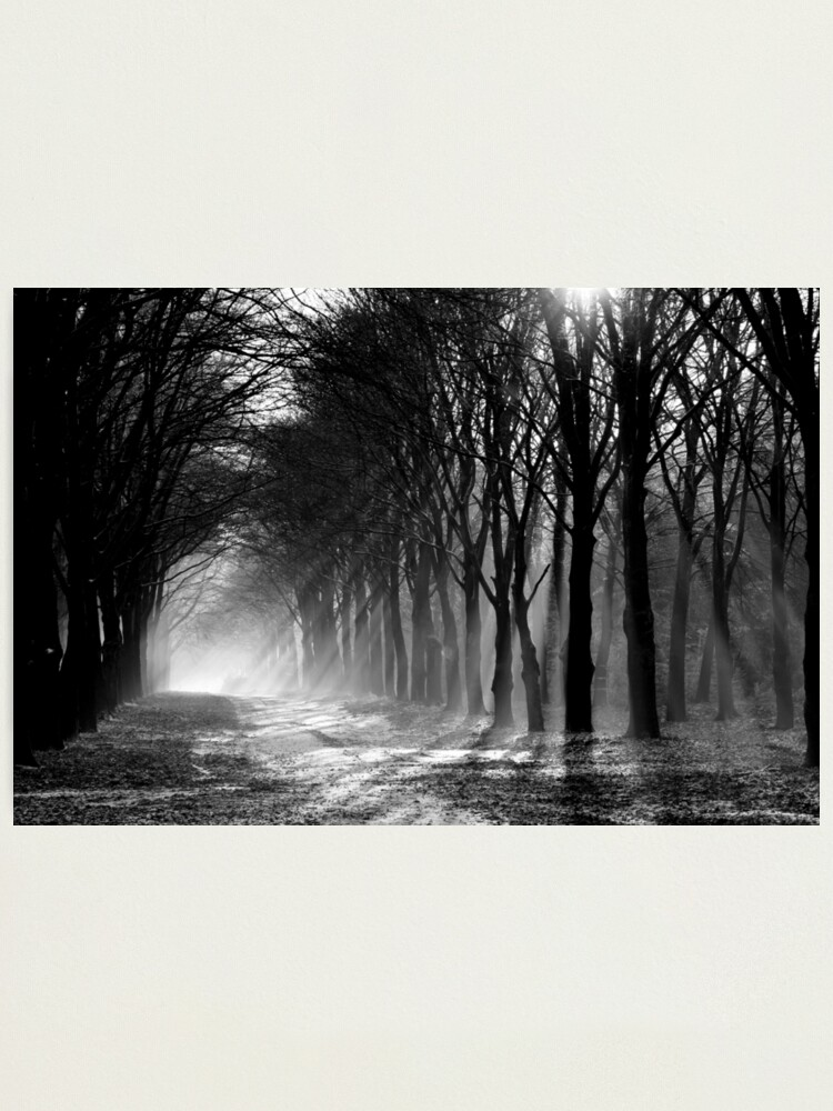 Alternate view of Forest path Photographic Print