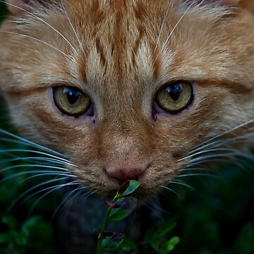 On The Prowl by SunDwn