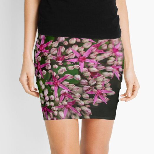 Sedum Autumn Joy Mini Skirt