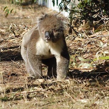 Walking Koala by JaneIzzyPhoto