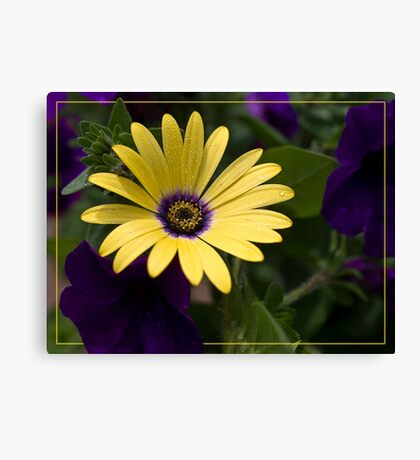 Purple and Yellow Canvas Print