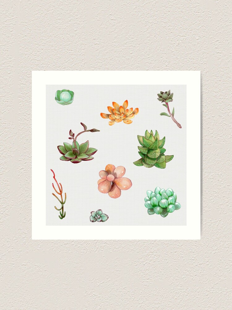 Alternate view of Bubbly Succulents Art Print