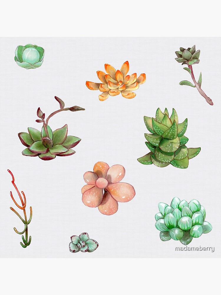 Bubbly Succulents by madameberry
