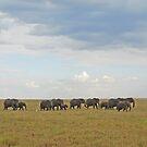 Under Serengeti Skies, Tanzania, Africa by Adrian Paul