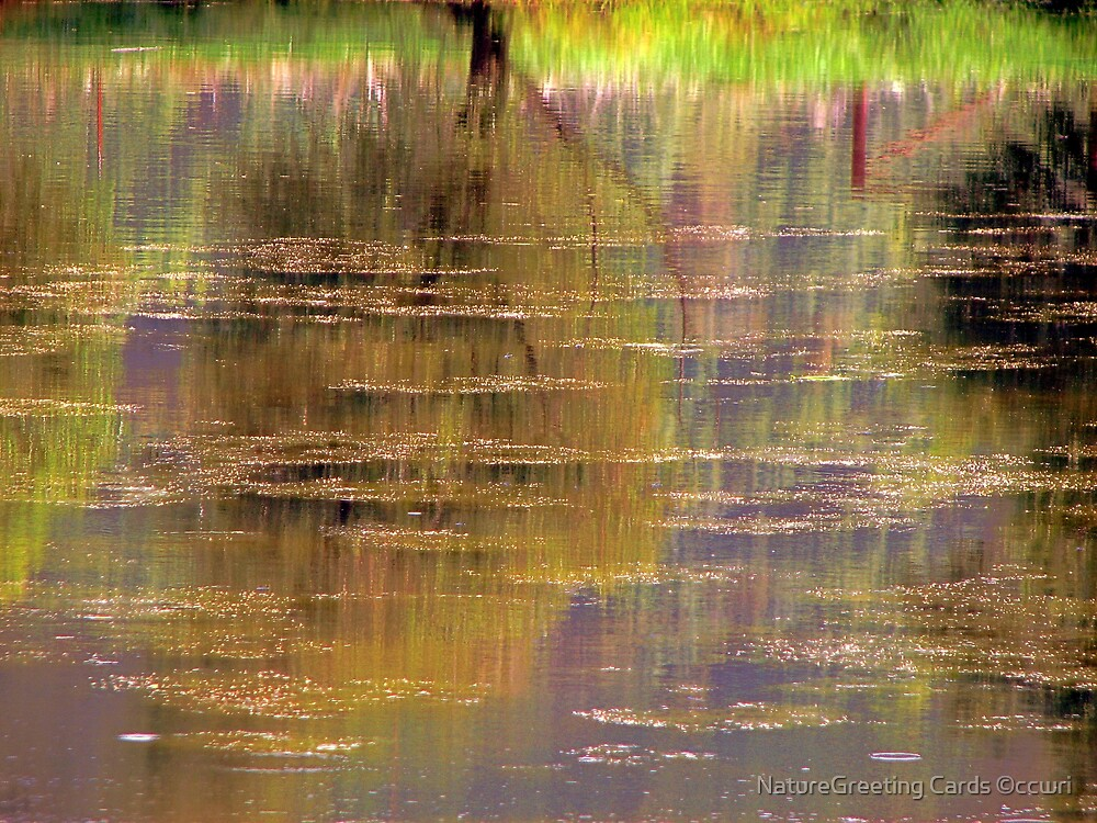 ~ Rainbow Reflections ~ by NatureGreeting Cards ©ccwri
