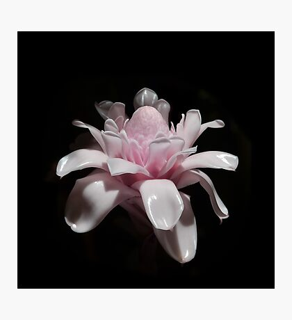 Pink Tropical Flower Photographic Print