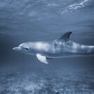Dolphin by diveroptic