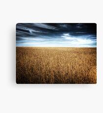 Alberta Wheat Field Canvas Print