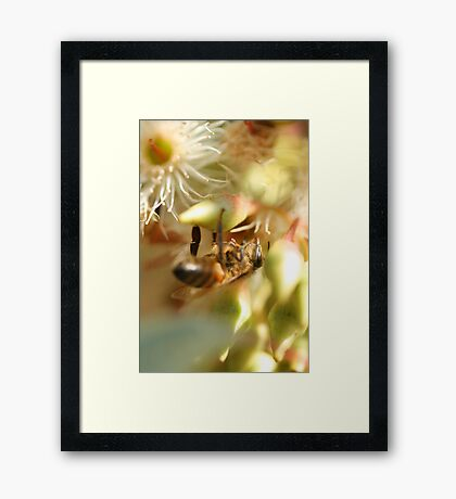 Lifes Cycle Framed Print