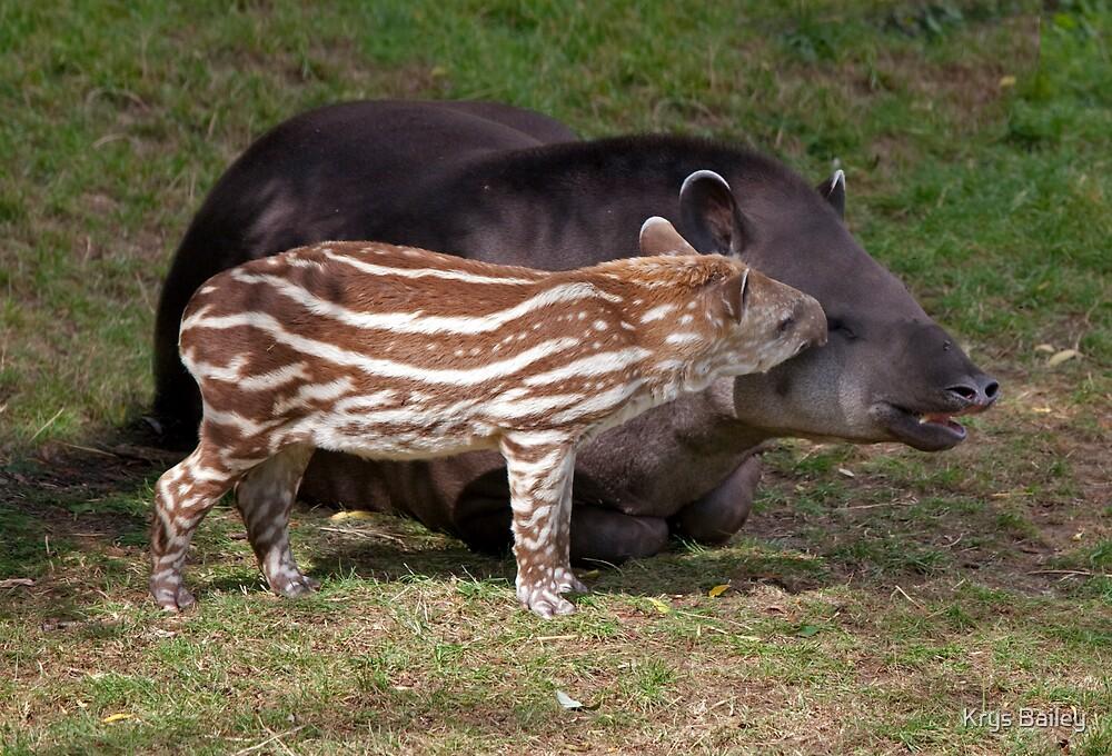Mint Humbug and Mum (Brazilian Tapir) by Krys Bailey