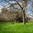 Green Grass by vonb