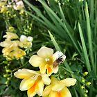 Sleeping Bee on my Jonquils  by TeAnne