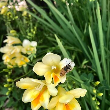 Sleeping Bee on my Jonquils  by TeAnne