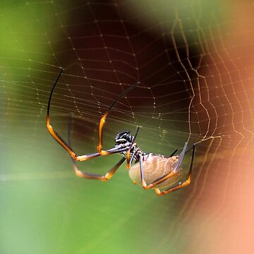 Spider making her web by Frozigraphie