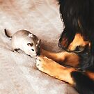Puppy & Gerbil by Monica Carvalho (mofart_photomontages)