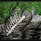 DEATH II BRUSHSTROKES by BOLLA67