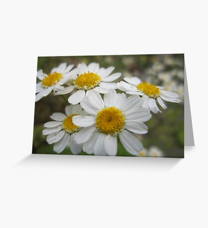 Happy Days(ies) Greeting Card
